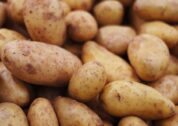 Bioengineered-Late-Blight-Resistant-Potato-to-Benefit-e1590454999904.jpg