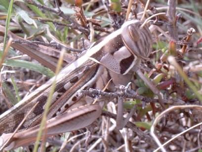 Locust-Outbreak-in-Eastern-Africa.jpg